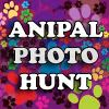 Anipal Photo Hunt